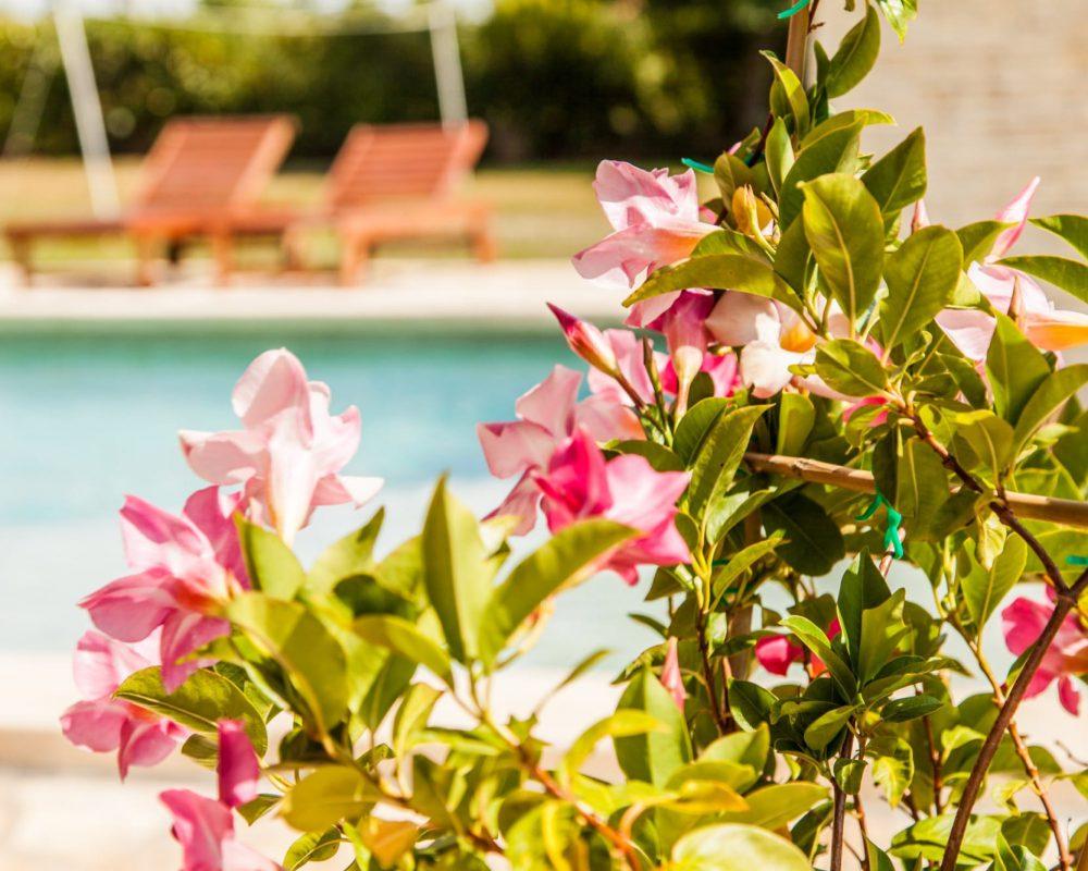 An der Steinterrasse der Villa Alma blüht der rosafarbene Oleander.